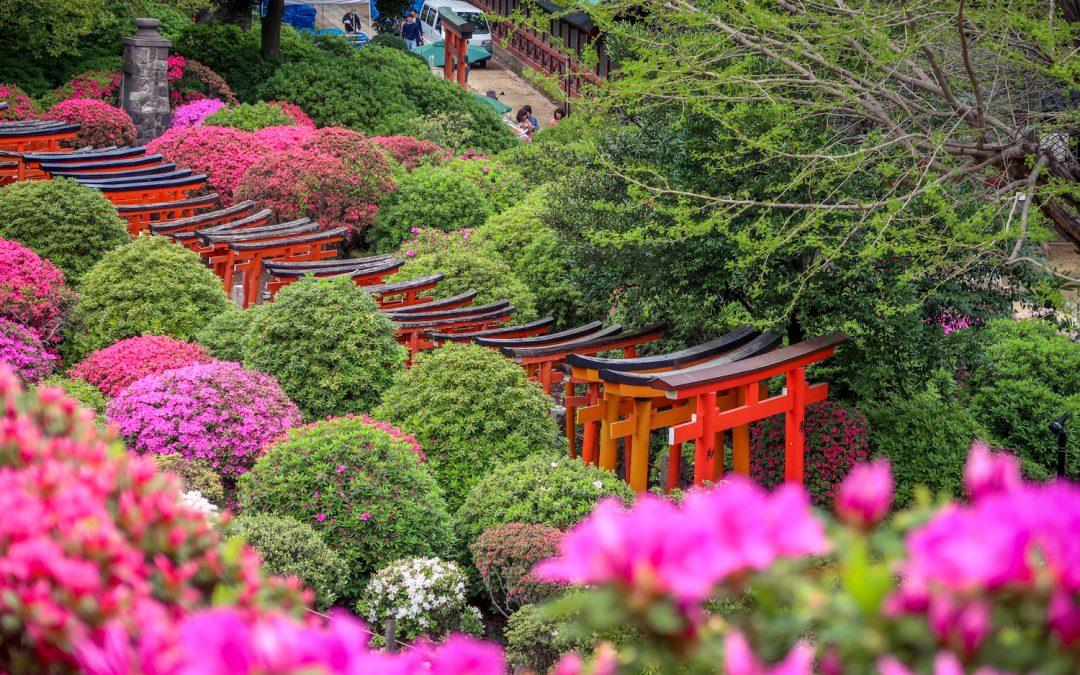 Le festival des Azalées au Temple de Nezu